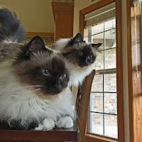 Miss Gali & Lucy-my greatest scrapping inspirations ^..^