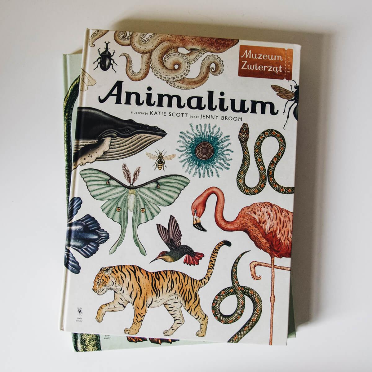 Animalium książka dla dzieci