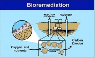 Bioteknologi di bidang lingkungan