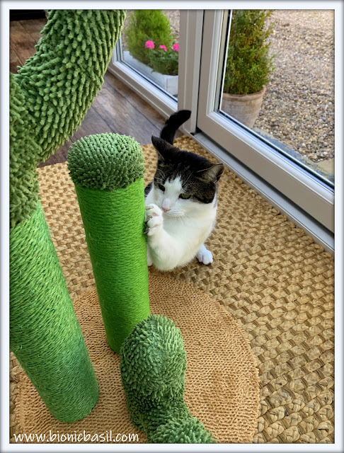 Melvyn vs The Cactus ©BionicBasil® The Pet Parade 376