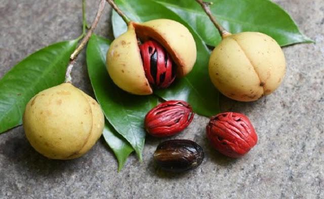 Begini Cara Membudidayakan Tanaman Buah Pala, Buah yang Banyak Diincar Orang Portugis dan Dihasilkan di Maluku