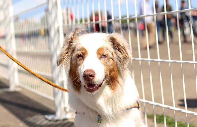 Dog Breeding: An Introduction