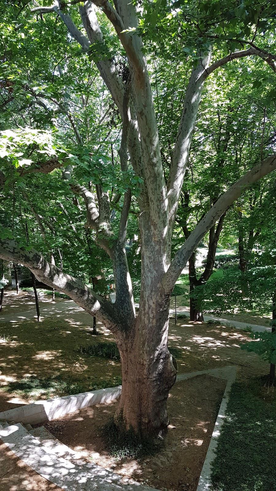 300 arbres des entrepots furent conservés