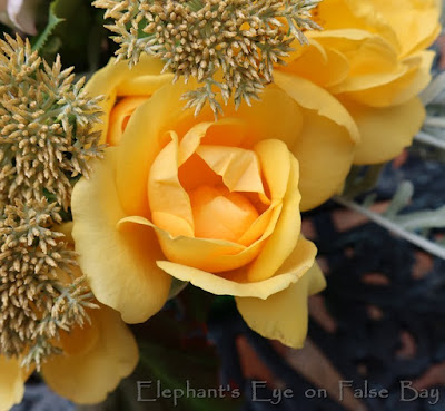 South Africa rose beauty fragrance and thorns