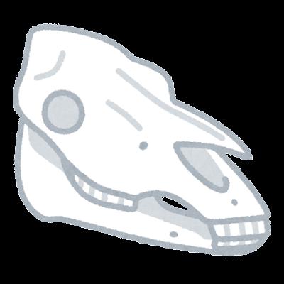馬の頭蓋骨のイラスト