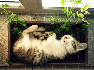 Como alejar a los gatos de las macetas - 2