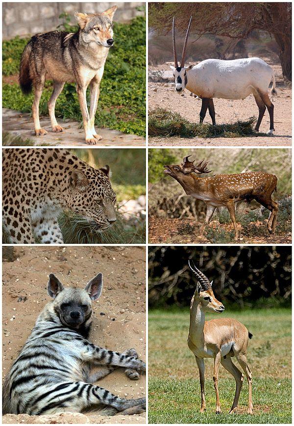 نتيجة بحث الصور عن الثدييات