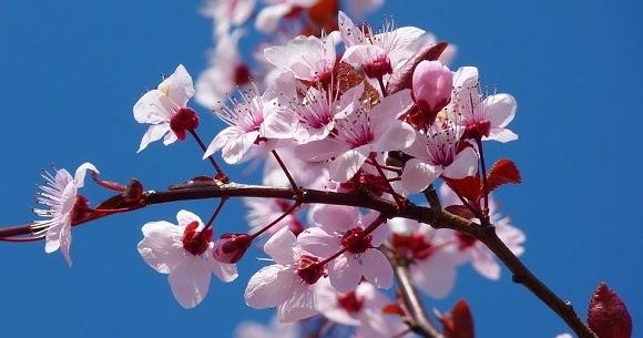 Frasi Sulla Primavera.Frasi Sulla Primavera Scuolissima Com