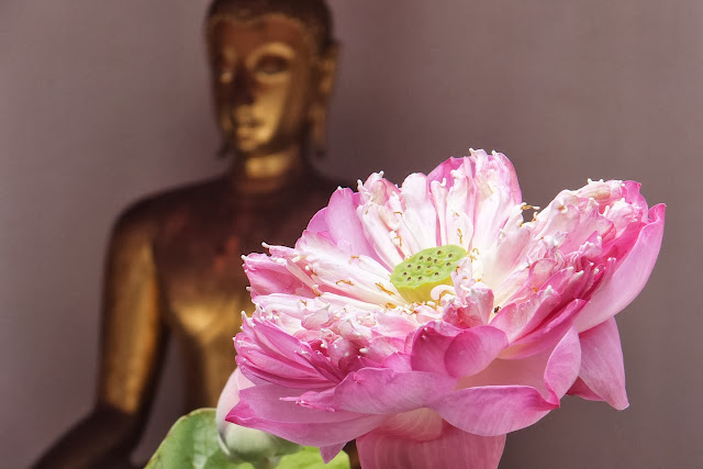 lotus-flower 蓮の花
