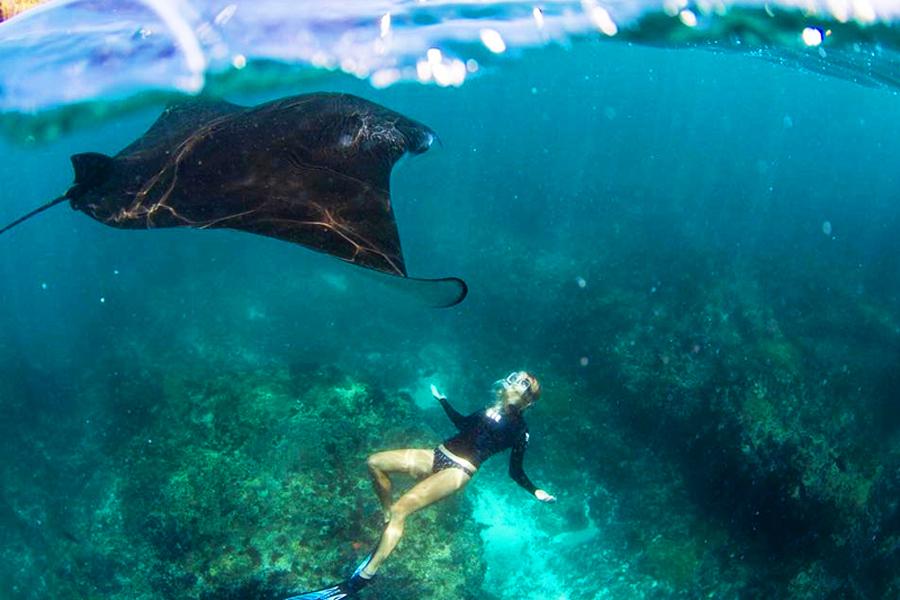 Mengejar ikan pari – Manta Bay