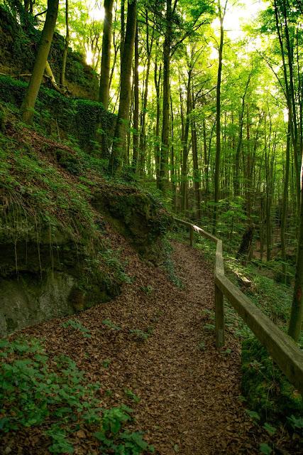 Königstein Rundwanderweg Nr. 18  Steinberg-Rundweg  Amberg-Sulzbacher Land 08