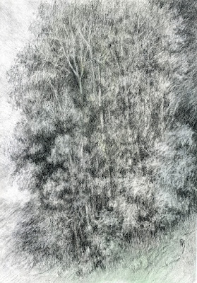 art sketch plein air nature tree charcoal outdoors