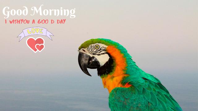 parrot Good Morning image