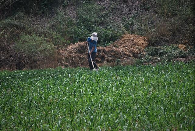 buscar trabajo agrícola