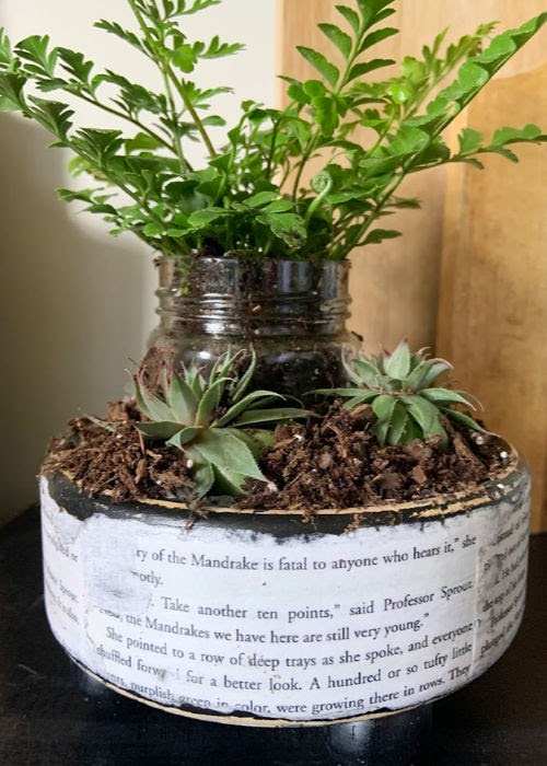 Harry Potter Planter - fern and succulents in planter