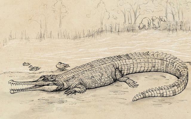 Huge prehistoric croc 'river boss' prowled Queensland waterways
