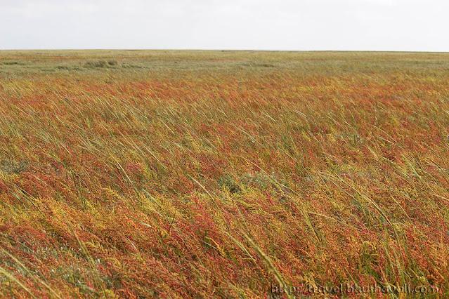 De Schorren Texel Salt Water Marshes