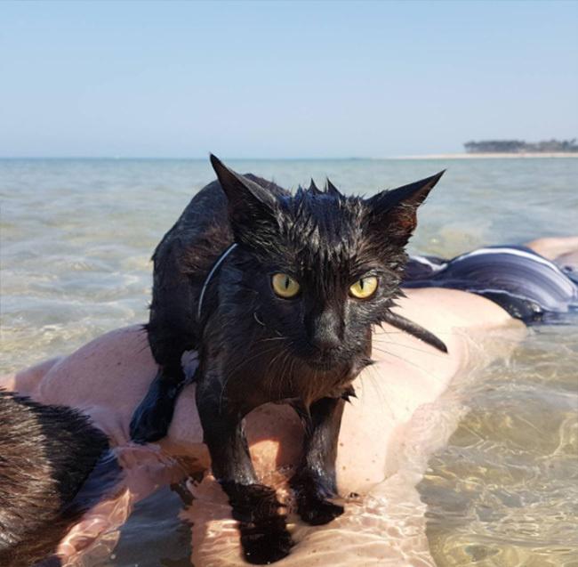 kitten cat loves to swim