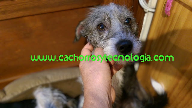Gala nariz perro dog huella dactilar puppy cachorro shurlonrad tecnologia nose