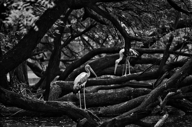 सतपुड़ा के जंगलों में - सुरेश ऋतुपर्ण