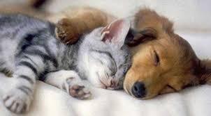 Ame seu animal de estimação