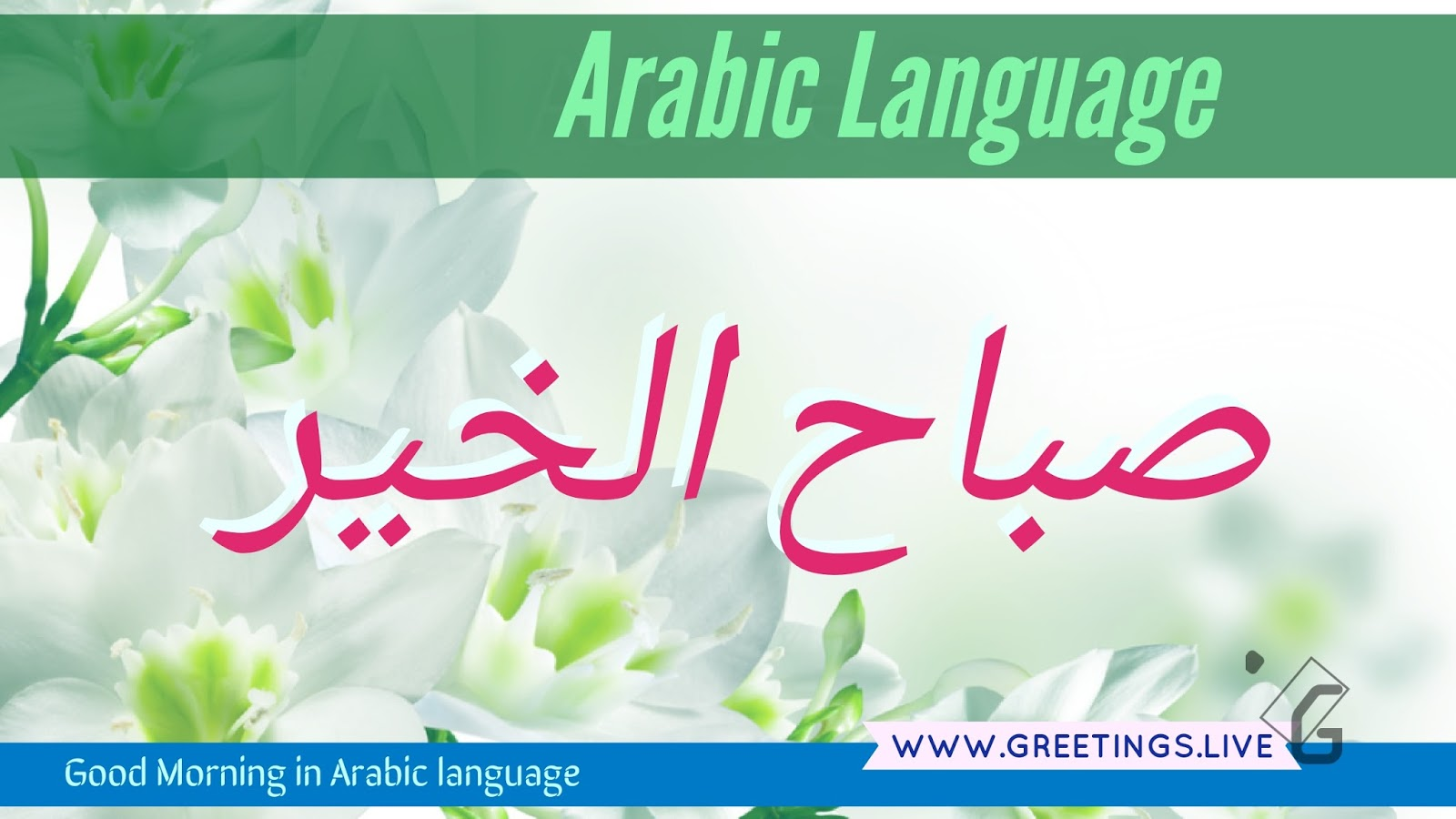 5 different scenery morning wishes in arabic language greetings light greenish white flowers back ground morning greetings in arabic language m4hsunfo
