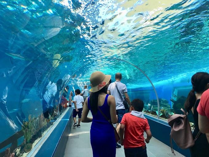 Things to see in Cebu Ocean Park, Cebu City