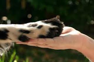 Projetos em prol dos animais serão abordados na quinta 12/03 pelo conselho municipal de proteção e defesa dos direitos dos animais