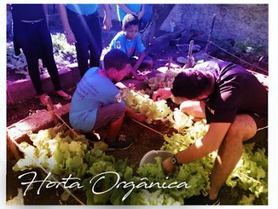 Alunos da rede municipal participam de colheita do projeto horta orgânica