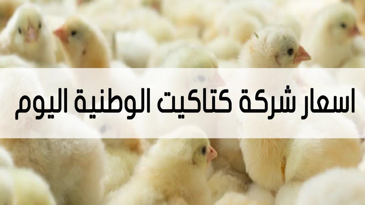 أسعار كتاكيت الوطنية اليوم شهر إبريل مصر 2021