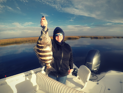 Biggest Sheepshead 2018