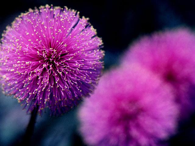صور اجمل الورود