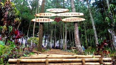 hutan pinus gogoniti