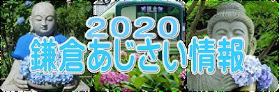 2020鎌倉あじさい情報