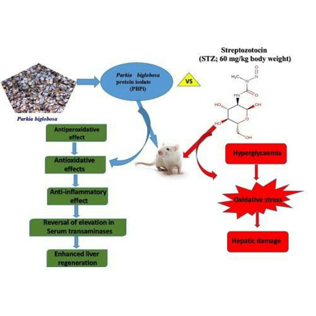 ANTI-DIABETIC EFFECT OF METHANOLIC EXTRACT OF Parkia biglobosa LEAF IN ALLOXAN INDUCED DIABETIC RAT