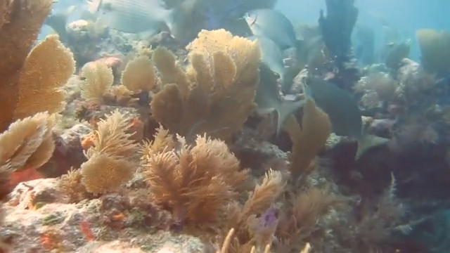 Molasses Reef in Key Largo