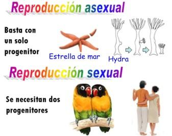 Diferencia entre planta sexual y asexual