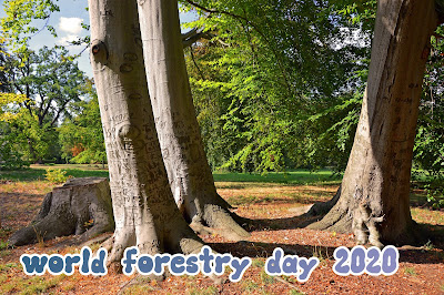 World Forest day | Forest picture free download 2020