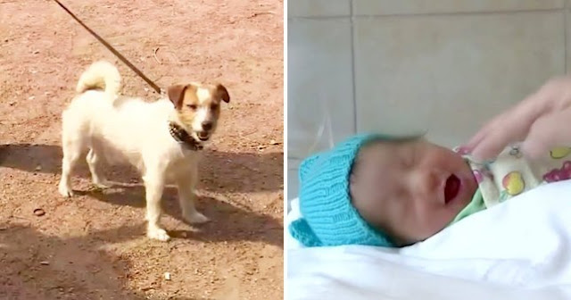 Dog saves abandoned baby by pulling his owner into bushes to find the baby