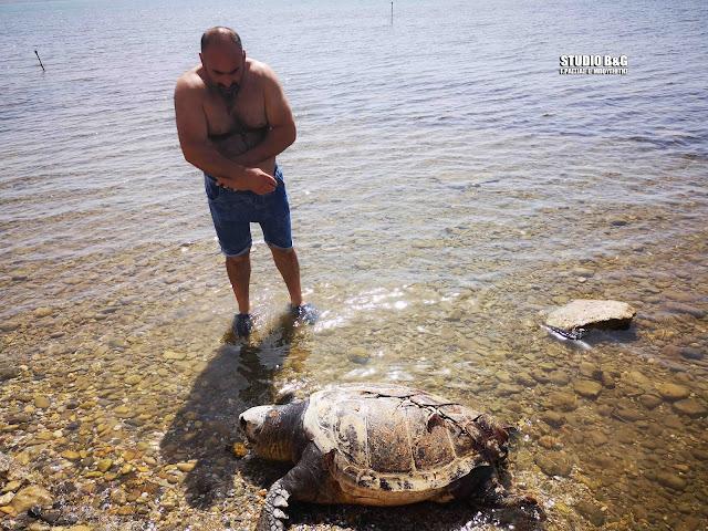 Νεκρή ακόμα μια θαλάσσια χελώνα στην Αργολίδα (βίντεο)