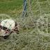 Copa Aramis Polli: Camaradas e Olympiakos garantem vaga