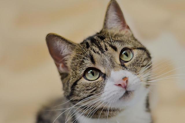 10 sinais que seu gato confia em você