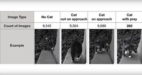 Нейросеть против кота — кто кого?