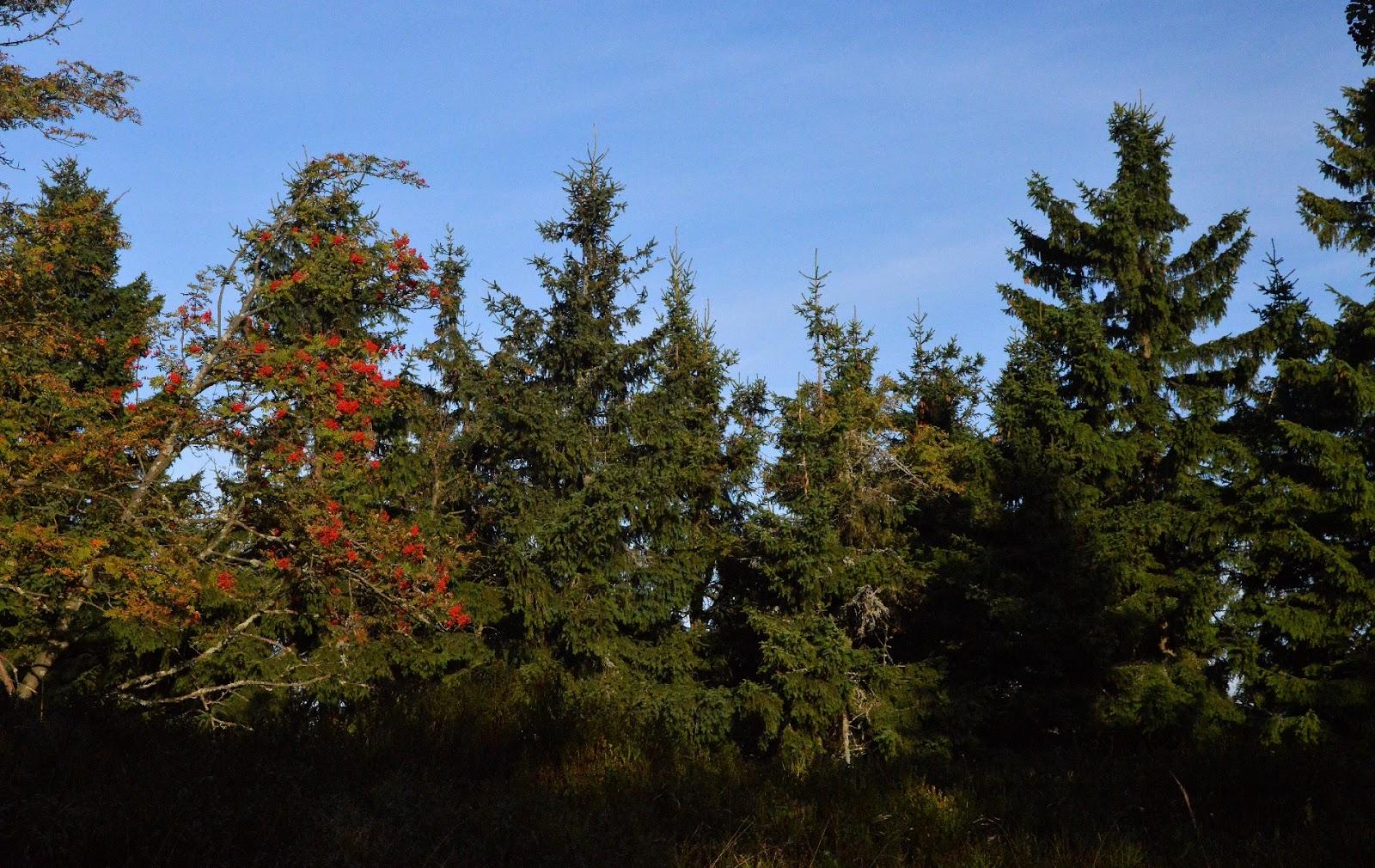 Początek jesieni w Górach Orlickich