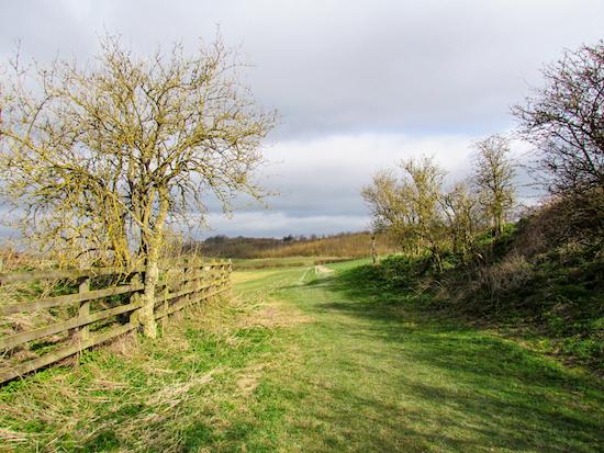 A footpath along 122: Therfield Loop N