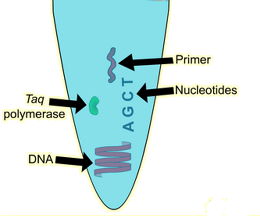 basic requirements of PCR