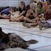 Σκύλος διδάσκει σε παιδιά πώς να αποφεύγουν τις επιθέσεις...