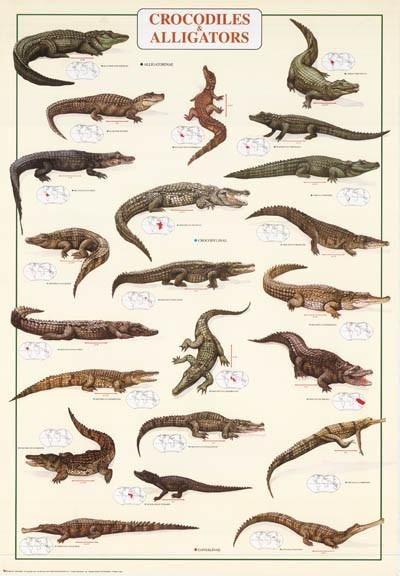 Répteis | Tartarugas, Cobras, Jacarés, Crocodilos e Lagartos
