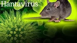 Hantavirus in china : Man dies from hantavirus in China