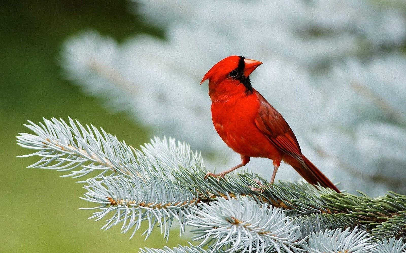 Birds Desktop Wallpapers